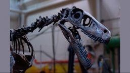 あなたの隣りに恐竜が・・・